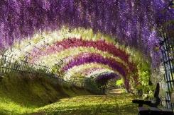 beautiful-hanging-garden-flowers-park-bench-photo1
