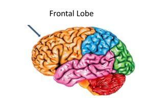 Frontal+Lobe.jpg
